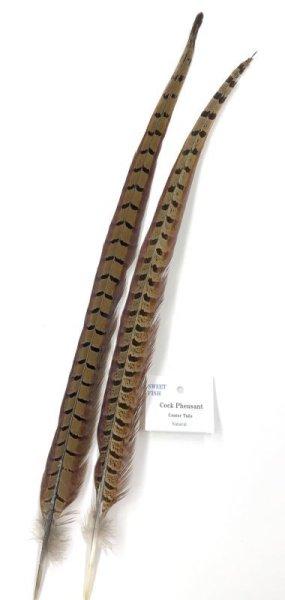 画像1: Cock Pheasant center tail  (1)